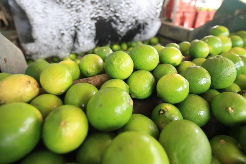 Limão Taiti movimenta a economia do município de Monte Alegre - Para